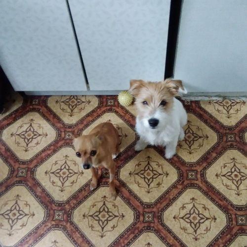 Сегодня я покажу вам как живут двинутые на голову люди, обожающие собак, фото 6