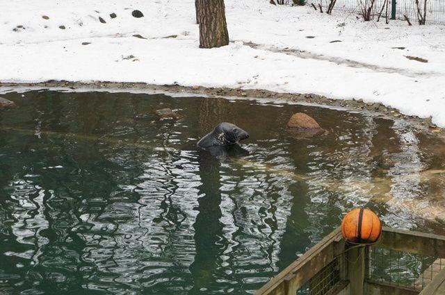 Один мой день в Латвии, я покажу вам зимнею Ригу, фото 22