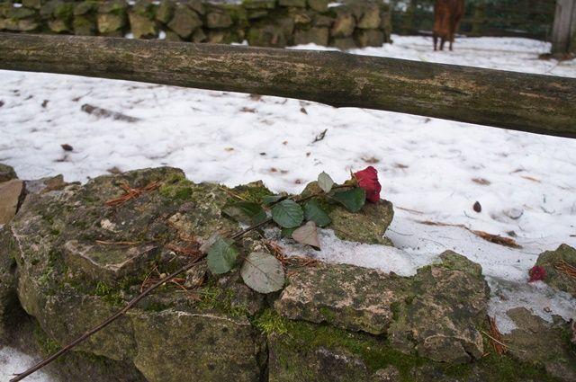 Один мой день в Латвии, я покажу вам зимнею Ригу, фото 25