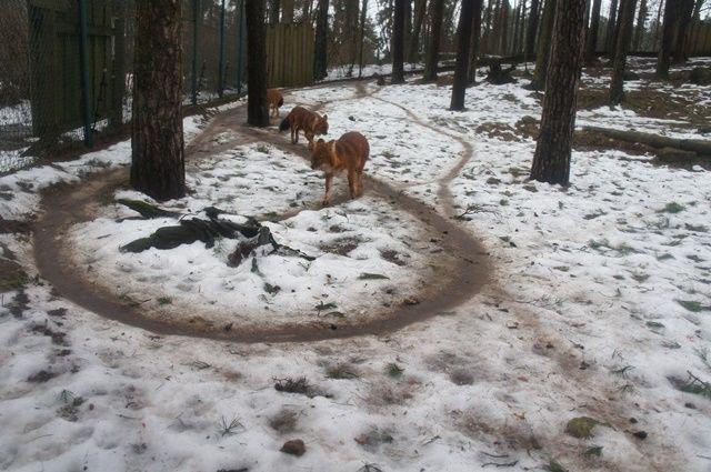 Один мой день в Латвии, я покажу вам зимнею Ригу, фото 44